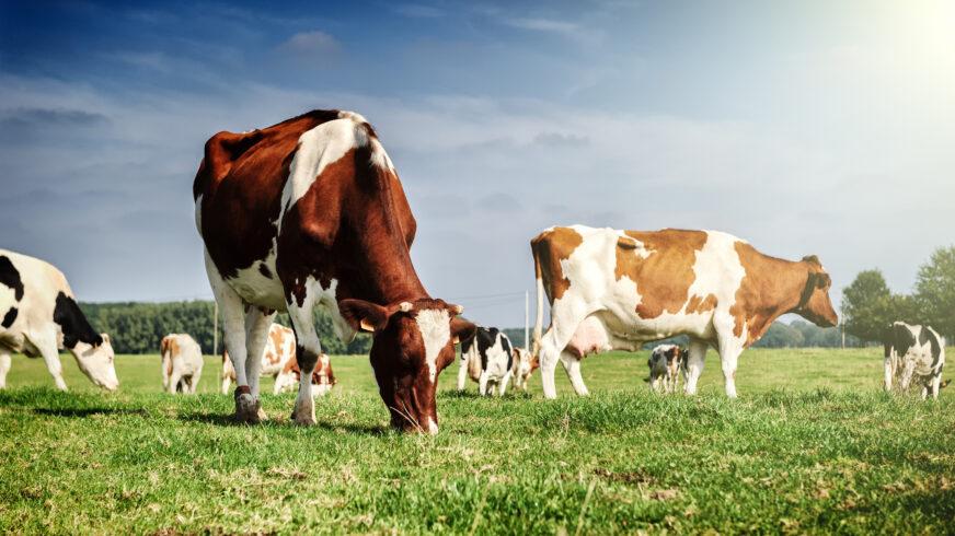 Cattle breeding is rocket science